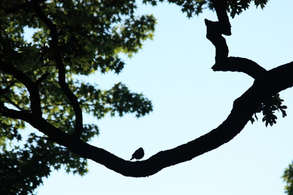 bird on limb