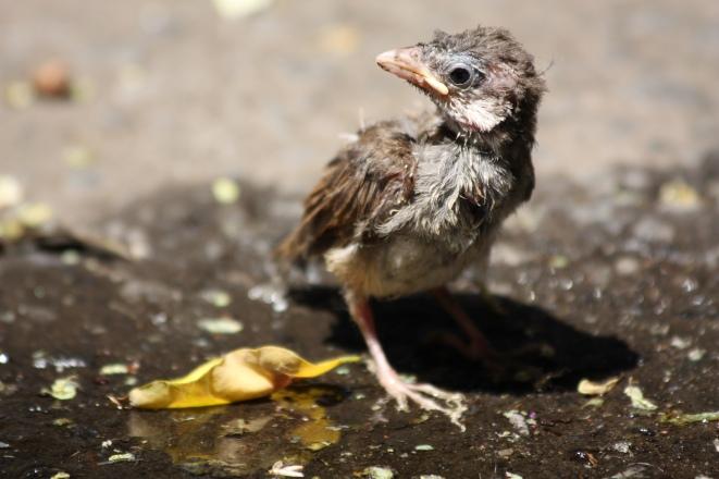 chick on street