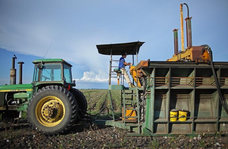 cotton press wide