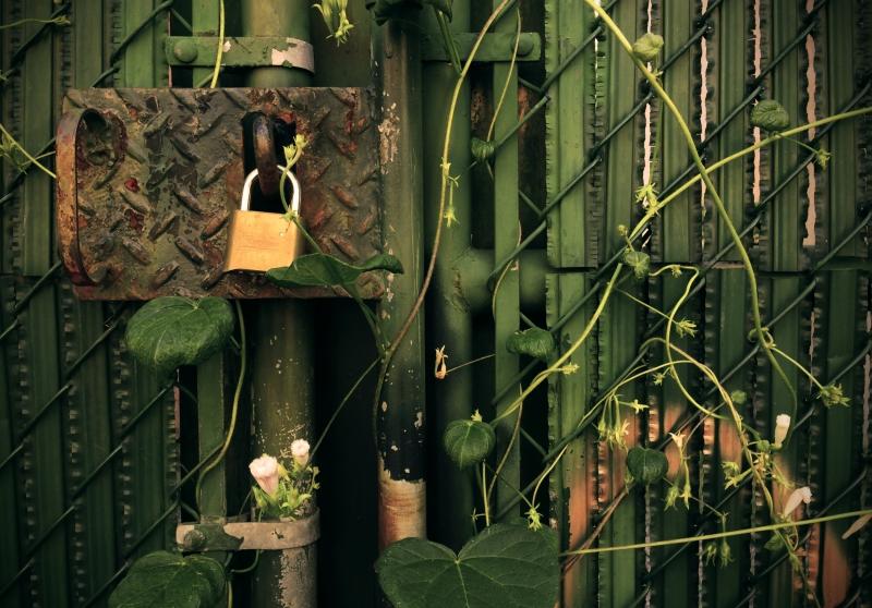 leafy lock copy