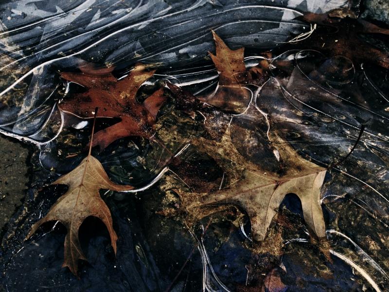 leaf ice 2