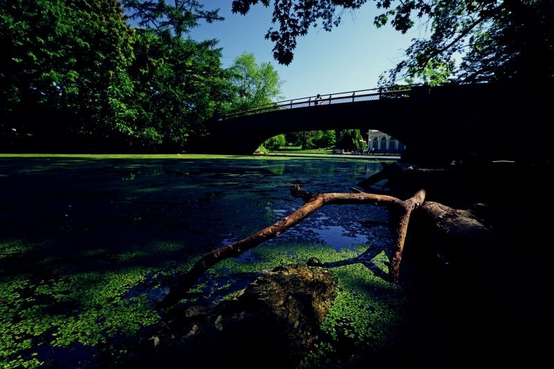 algae pond 2